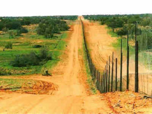 Pagar Dingo : Pagar Terpanjang Di Dunia