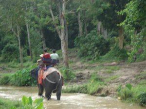 Pengalaman Berwisata Naik Gajah di Phuket