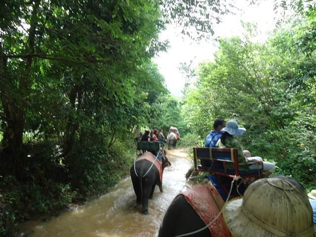 wisata naik gajah di phuket