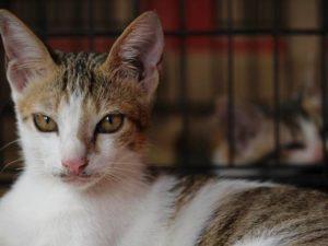 Coba Cara Sederhana Ini Untuk Menghilangkan Ailurophobia atau Phobia Kucing