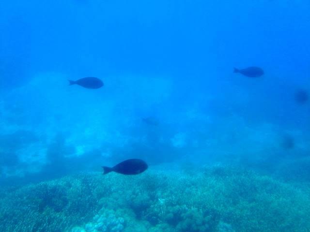 Menikmati Pemandangan Bawah Laut Bali