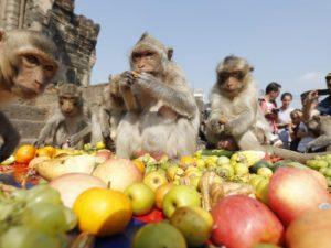 Monkey Buffet Festival – Festival Prasmanan Monyet