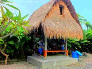 Wisata Kopi Luwak di Bali