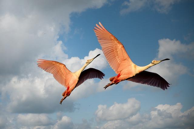 15 Fakta Menarik Tentang Flamingo