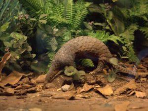 Diorama Trenggiling Berburu Semut – Museum Satwa Jatim Park #11