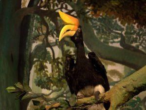 "Diorama Rangkong Si Burung Dengan ""Tanduk Sapi"" – Museum Satwa, jatim Park #14"