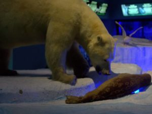 Diorama Beruang Kutub Memangsa Anjing Laut – Museum Satwa Jatim Pak #16
