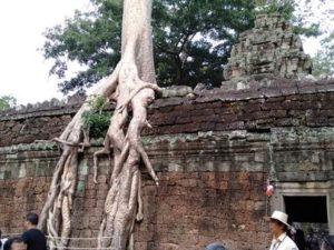 [MENCENGANGKAN] Melihat Pohon Raksasa Tumbuh Di Atas Candi