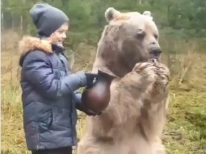 [VIDEO] Bisakah Beruang Duduk Dan  Minum Dari Cangkir ?