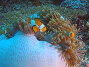 [VIDEO] Keindahan Terumbu Karang Dan Kehidupan Bawah Laut Di Raja Ampat