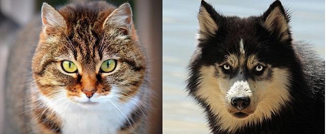 [VIDEO] Sepertinya Peribahasa Seperti Kucing Dan Anjing Harus Direvisi