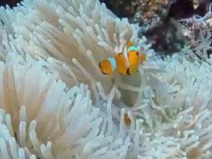[VIDEO] Keindahan Pemandangan Bawah Laut Bunaken
