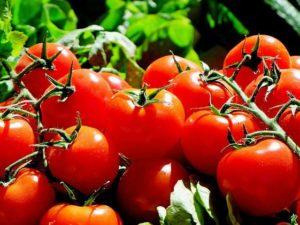 Tomat, Si Merah Merona; Dulu, Disangka Beracun