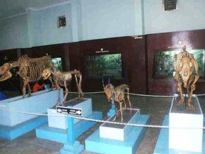 [Foto] Koleksi Fosil Vertebrata di Museum Zoologi
