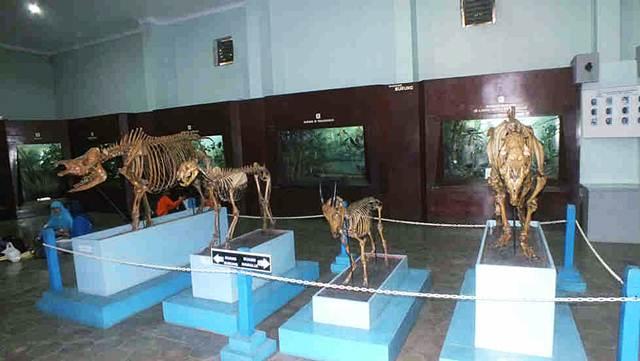 Koleksi Fosil Hewan Vertebrata di Museum Zoologi