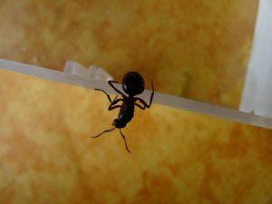 Apakah Semut Akan Mati Ketika Jatuh Dari Ketinggian?