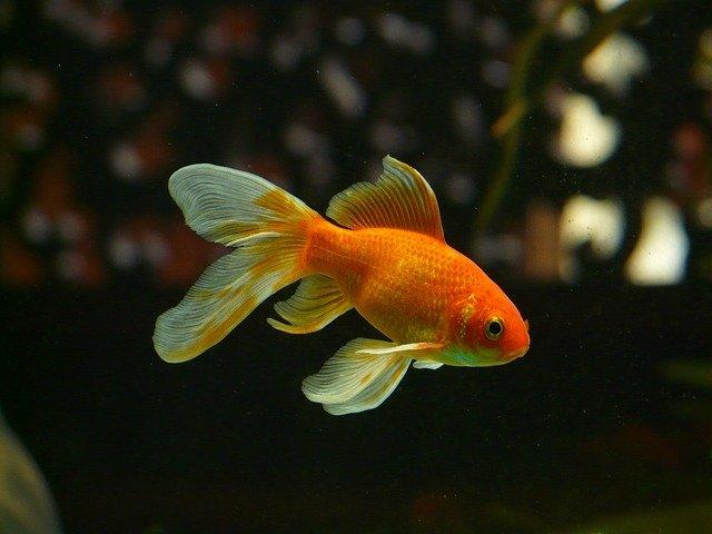 Hei, Ikan! Kenapa Kamu Melotot Aje?